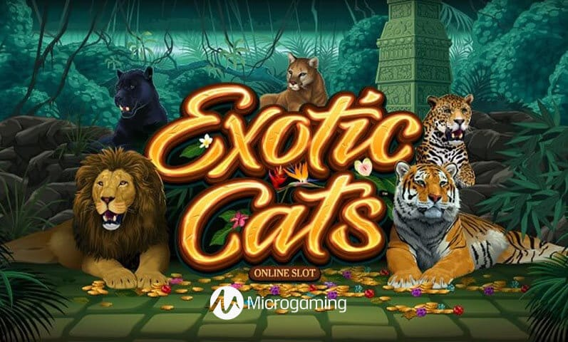 Exotic Cats Slots Mega Reel