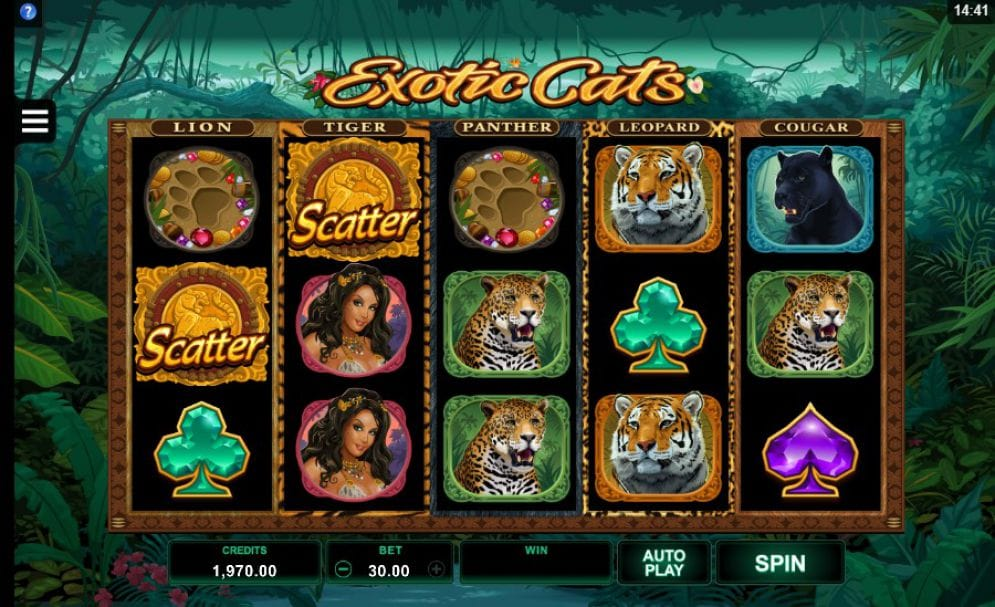 Exotic Cats Slots Online